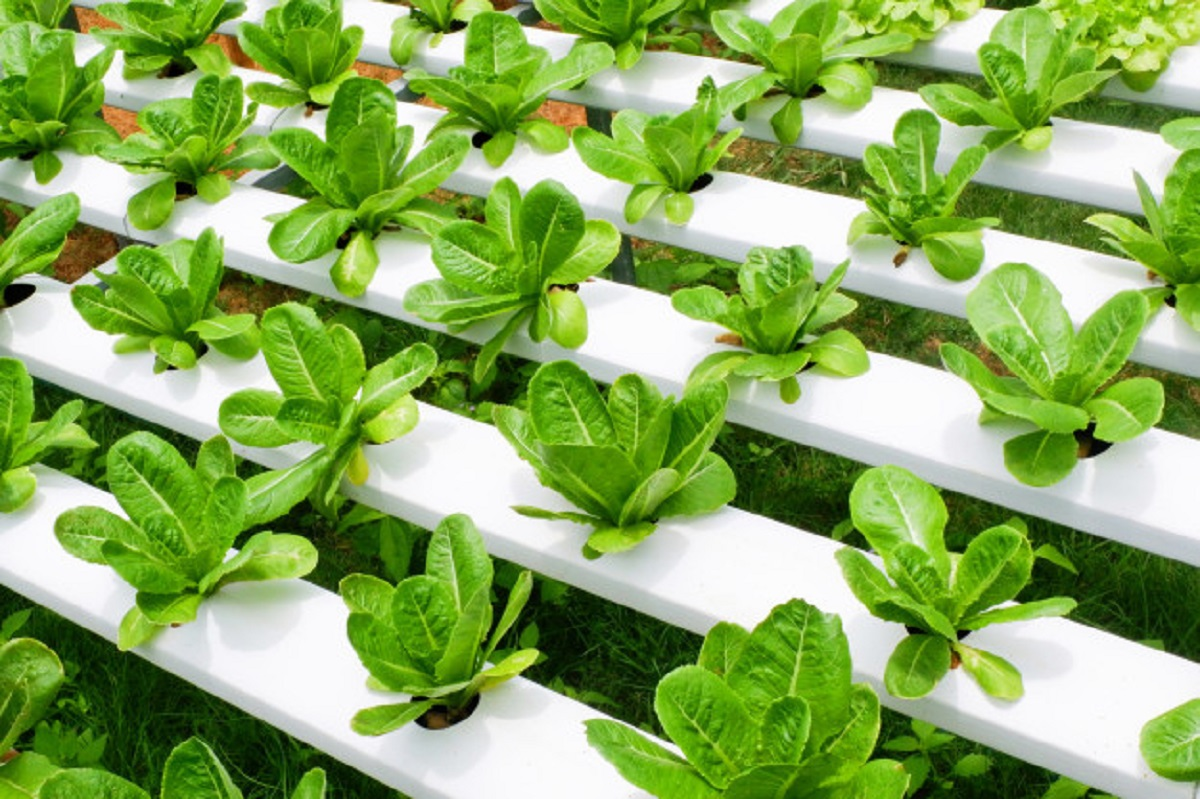 AI-aided Vertical farms are all set to shoot up